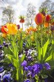 Tulipanowy łóżko w parku Obraz Stock