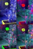 Tulipanowy abstrakt Zdjęcie Stock