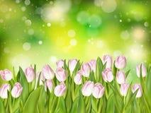 Tulipanowy bukiet na bokeh 10 eps Zdjęcie Stock