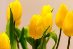 Tulipanowy bukiet z dużo kwitnie jako Wielkanocna dekoracja Zdjęcie Stock