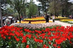 Tulipanowy festiwal, emirgan parkowy Istanbul indyk Zdjęcie Royalty Free