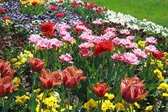 Tulipanowy kwiatu tło - wiosna kwiatów Akcyjne fotografie zdjęcia royalty free