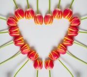 Tulipanowy serce Obraz Royalty Free