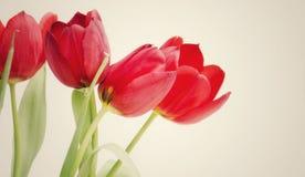 Tulipanowy tło zdjęcie stock