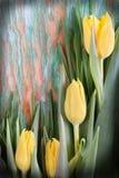 Tulipanowy tło Fotografia Stock