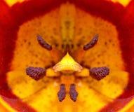 Tulipanowy zbliżenie szczegół zdjęcia stock
