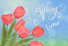 Tulipanu błyszczący tło i wiosny literowanie Obrazy Stock