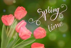 Tulipanu błyszczący tło i wiosny literowanie Fotografia Royalty Free
