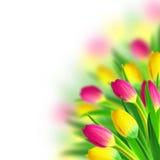Tulipanu bukiet zdjęcia royalty free