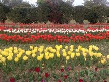 Tulipanu festiwal Fotografia Royalty Free