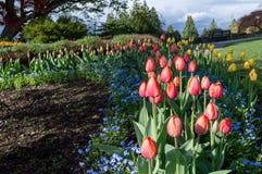 Tulipanu i kwiatu pole obraz stock