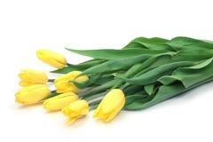 tulipanu kolor żółty obrazy royalty free
