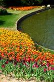 Tulipanu pole Zdjęcia Royalty Free
