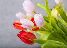 Tulipanu studia strzał Fotografia Stock