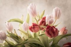 Tulipanu studia strzał Zdjęcia Stock