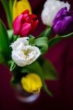 Tulipanu szczegół Zdjęcia Royalty Free