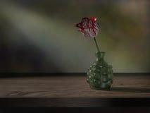 Tulipanu wciąż życie ilustracji