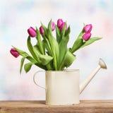 Tulipanu Wciąż życie Obraz Royalty Free
