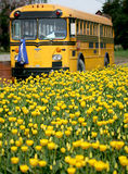 tulipany żółte Zdjęcia Stock