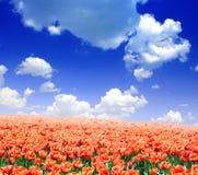Tulipany Zdjęcie Stock