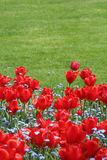 tulipany Zdjęcia Stock