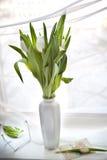 tulipany biały Obraz Royalty Free