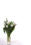 tulipany biały Fotografia Royalty Free
