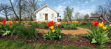 Tulipany, bielu dom, Beckman młyn, Beloit, WI fotografia royalty free