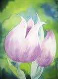 tulipany fiołkowi Obraz Stock