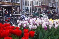 Tulipany i bicykle w Amsterdam obraz stock