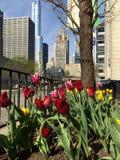 Tulipany i Ikonowi budynki Zdjęcia Royalty Free