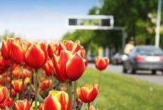 Tulipany i miasto ulica zdjęcia stock