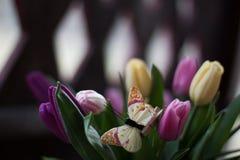 Tulipany i motyl Obrazy Royalty Free