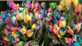 tulipany kolor Fotografia Stock