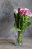 Tulipany kwitną w wiośnie Zdjęcia Stock
