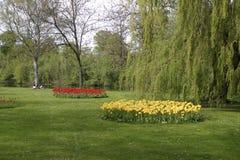 tulipany na żółte fotografia royalty free