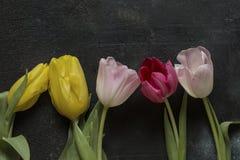 Tulipany na czarnym tle Zdjęcie Stock