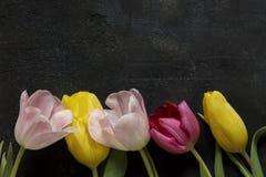 Tulipany na czarnym tle Zdjęcia Stock