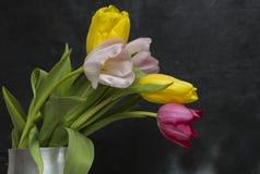 Tulipany na czarnym tle Obrazy Stock