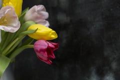Tulipany na czarnym tle Fotografia Stock