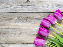 Tulipany na drewniani panel fotografia royalty free