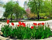 Tulipany na gazonie Zdjęcia Royalty Free