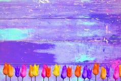 Tulipany na purpurowym kolorowym rocznika tle Fotografia Royalty Free