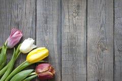 Tulipany na rocznik drewnianych deskach obrazy royalty free