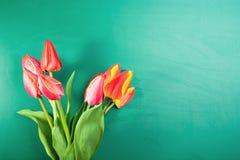 Tulipany na tle chalkboard Zdjęcie Royalty Free