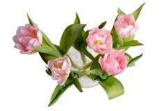 Tulipany od above fotografia royalty free