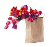 Tulipany, odizolowywający na bielu Zdjęcie Royalty Free