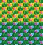Tulipany odpowiadają bezszwowych wzory Fotografia Royalty Free