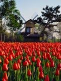 Tulipany pod wiatraczkiem zdjęcie royalty free