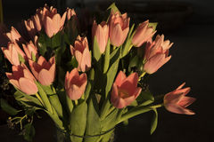 tulipany pomarańczowe Obrazy Stock